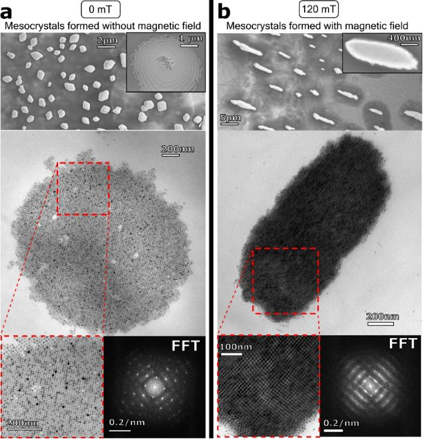 Magnetic field-assisted assembly of iron oxide mesocrystals: a