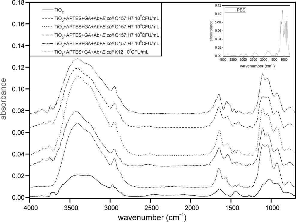 FTIR nanobiosensors for Escherichia coli detection