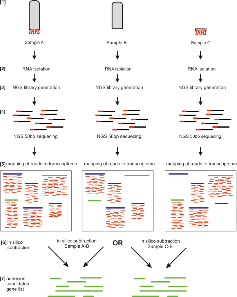 molecular biology research articles