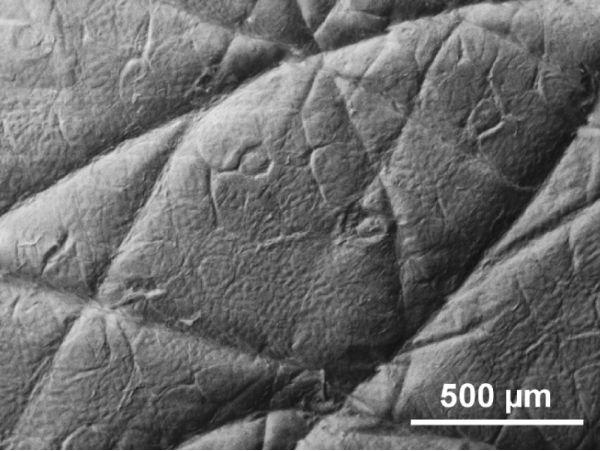 handbook of biological confocal microscopy pdf