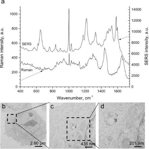 Interaction of dermatologically relevant nanoparticles with