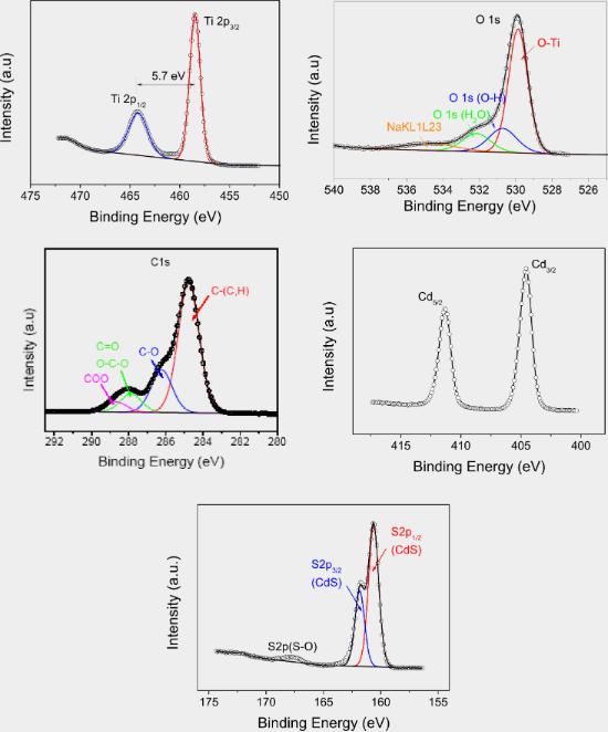 Study of mesoporous CdS-quantum-dot-sensitized TiO2 films