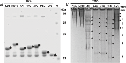 Peptide-equipped tobacco mosaic virus templates for selective and