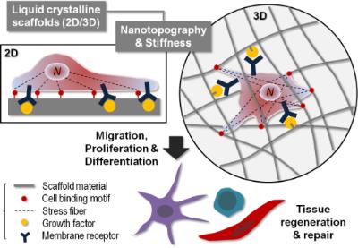 Liquid-crystalline nanoarchitectures for tissue engineering