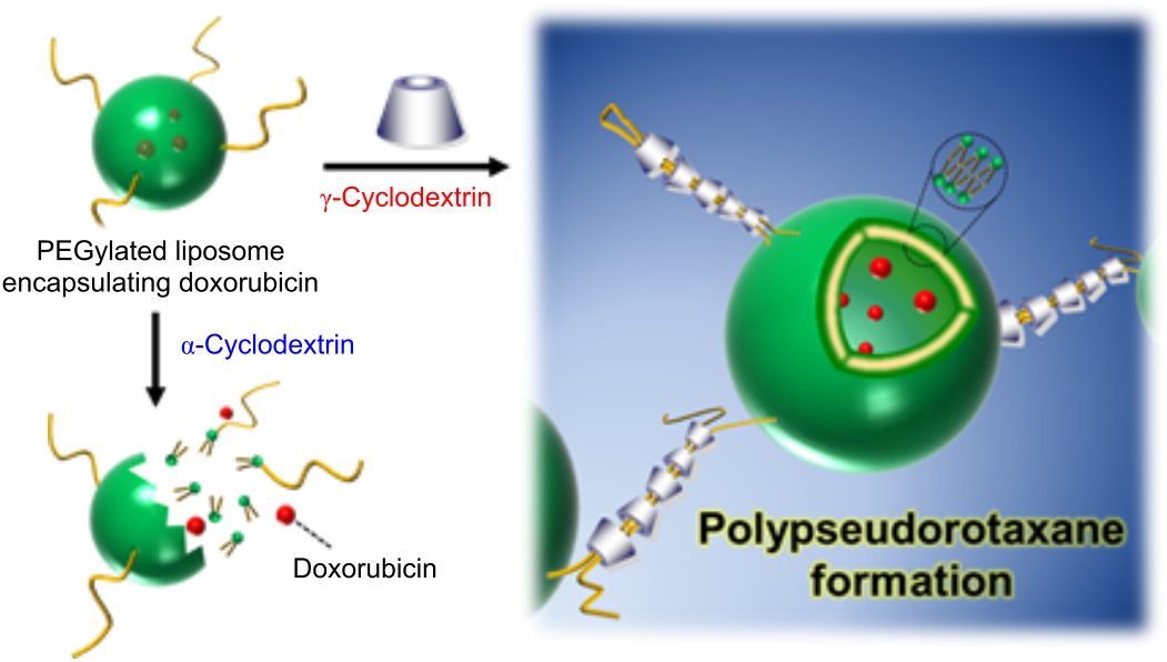 liposomes utilized for drug adminitstration Objective: deformable liposomes have been used to improve drugs  minimizing  toxic effects when compared with oral administration.