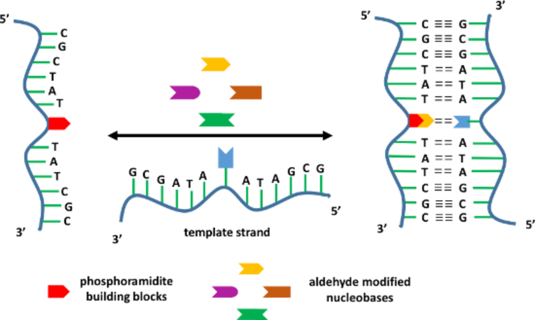 dna functionalization Dna-functionalization of quantum dots is the attachment of strands of dna to the  surface of a quantum dot although quantum dots with cd have some cytotoxic.