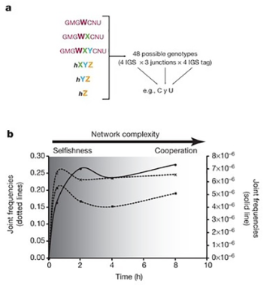 Towards open-ended evolution in self-replicating molecular systems