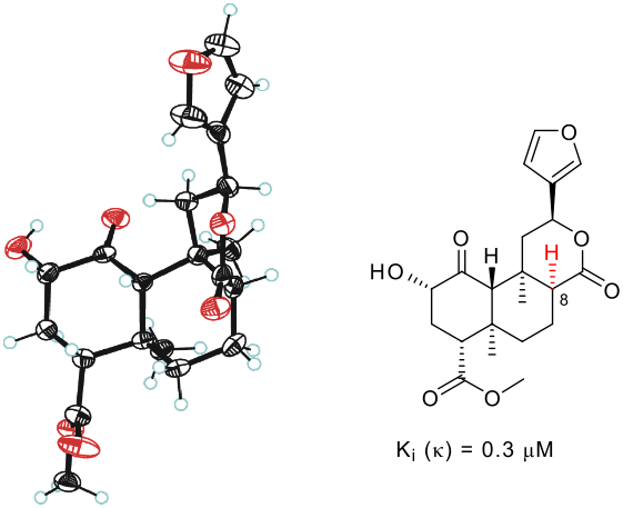 8-epi-Salvinorin B: crystal structure and affinity at the