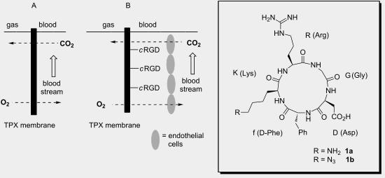 Towards a biocompatible artificial lung: Covalent