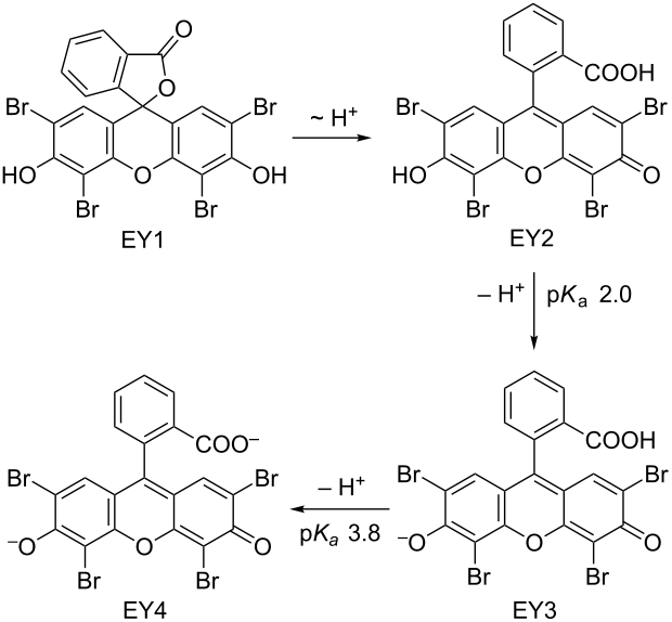 On the mechanism of photocatalytic reactions with eosin Y