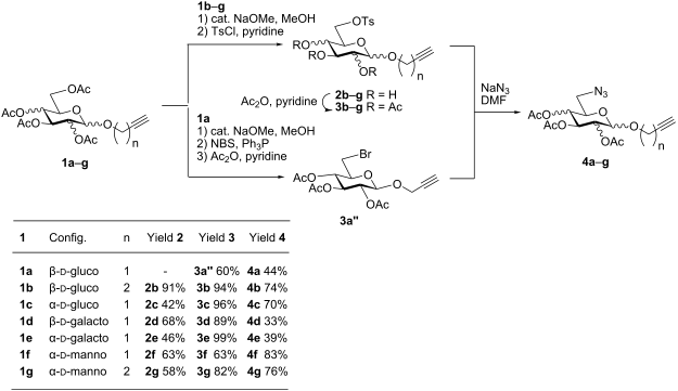 D Galactose Fischer D-galactose in 20  and 22