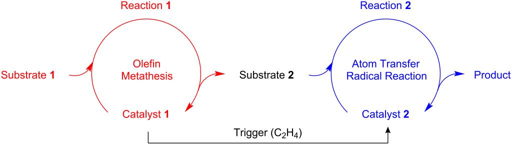 Ruthenium catalyzed tandem olefin metathesis oxidations